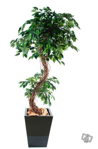 Ficus s artificiel 180 210 cm offre paris 75019 paris 120 for Decoration 75019