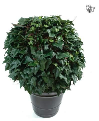 Lierre boule artificiel 40 50 60 70 cm offre paris 75019 for Plante 70 cm