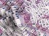 Oferta de împrumuturi bănești între persoane de orice fel offre Autres